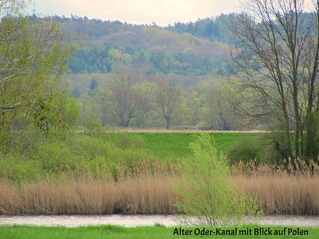 Wasser und grüne Frühlingslandschaft