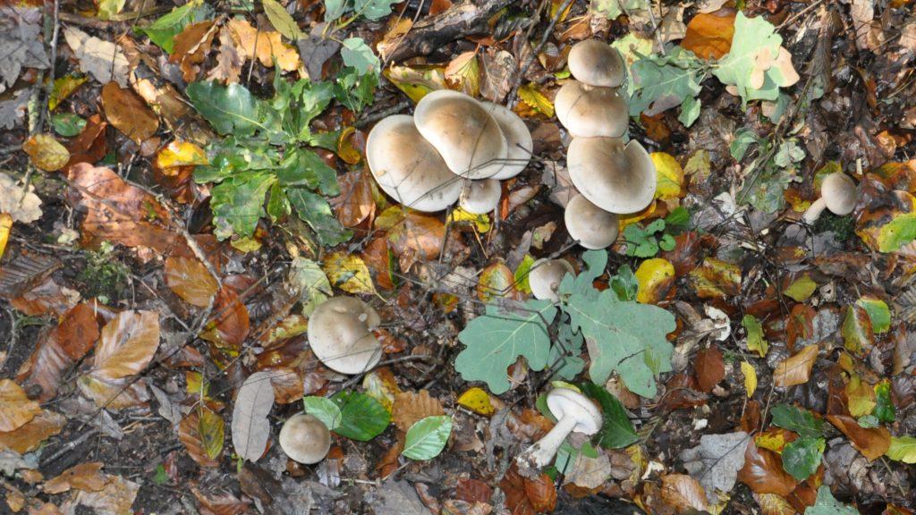 Pilze, Pilze, überall Pilze