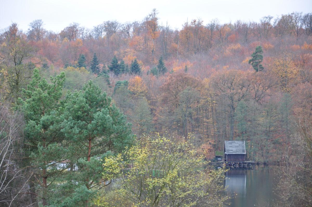 Novemberspaziergang am Wolletzsee