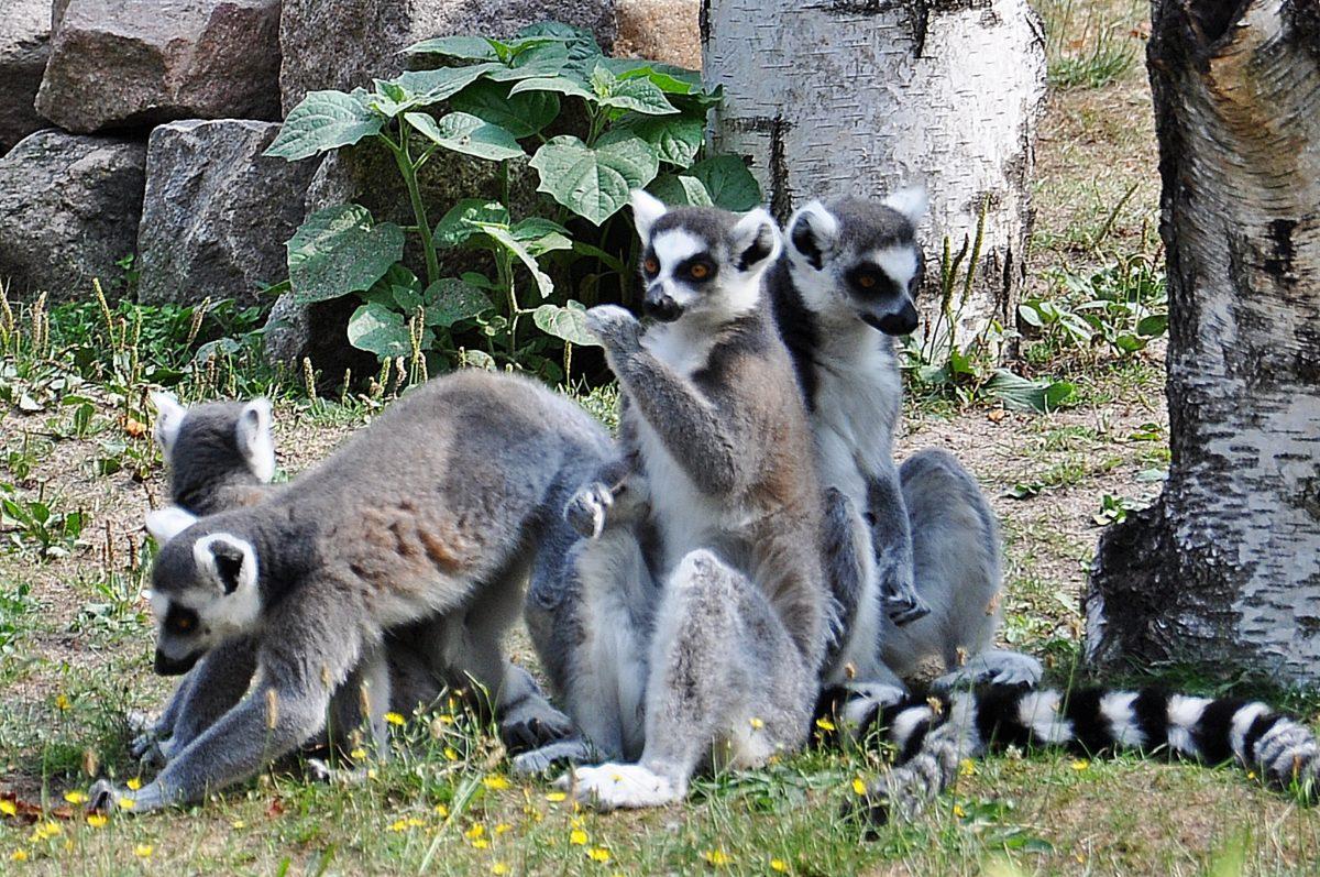 Angermünder Tierpark feiert 55. Geburtstag