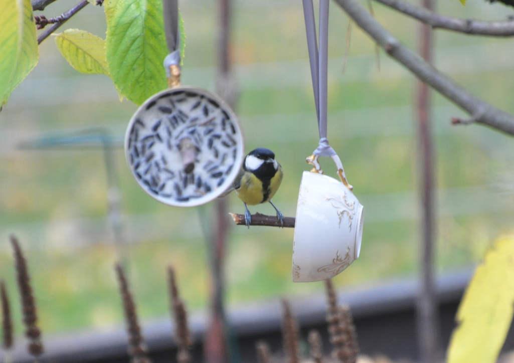 Schnabeltassen für hungrige Gartenbesucher